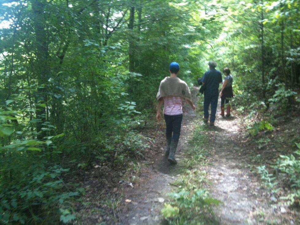 Forest Walks at Bonniespring