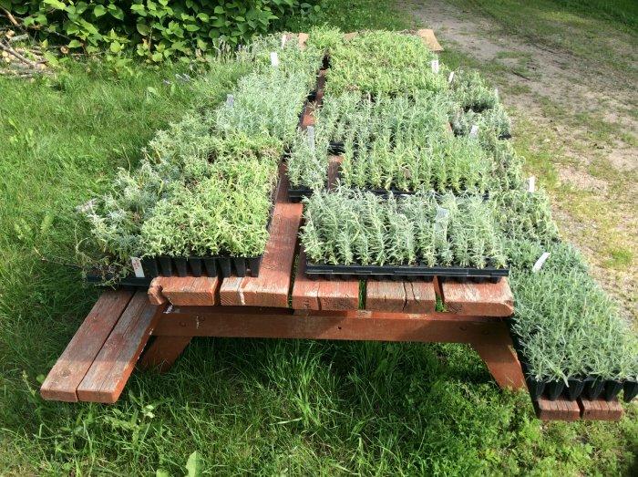 an array of plants